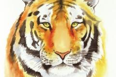 TIGER-RGB-web
