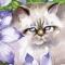 Persian Cat & Clematis